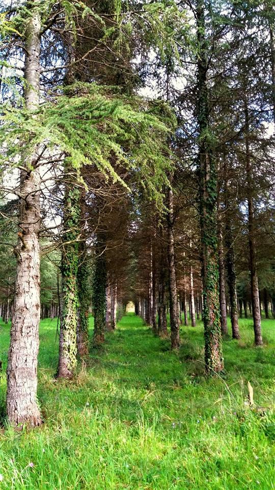 <strong>Il segreto bosco della Cellulosa </strong>