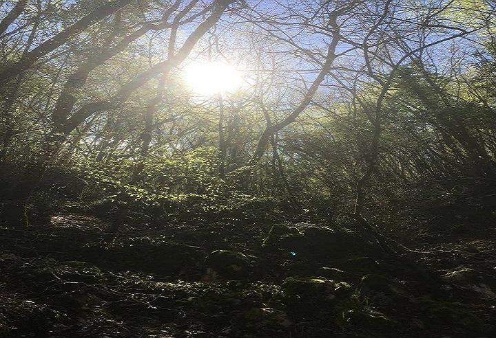 <strong>All'ombra dei pini secolari</strong>